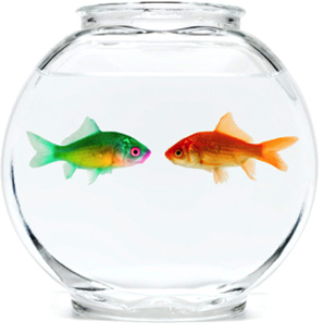are you: just two lost souls swimming in a fish bowl? Not likely if you have our intimacy tips!