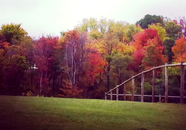 changing leaves in the Laurel Highlands