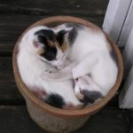 two cats in a flowerpot